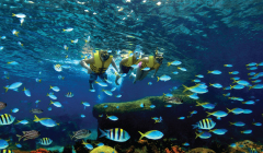 list-display_RWS_MLP_RainbowReef_240x140